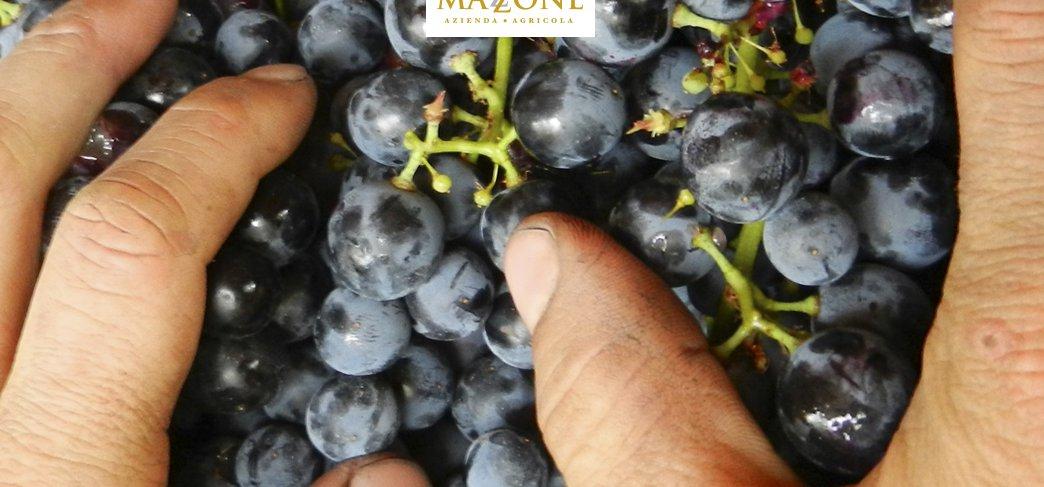 Azienda vini, quando degustare è un piacere